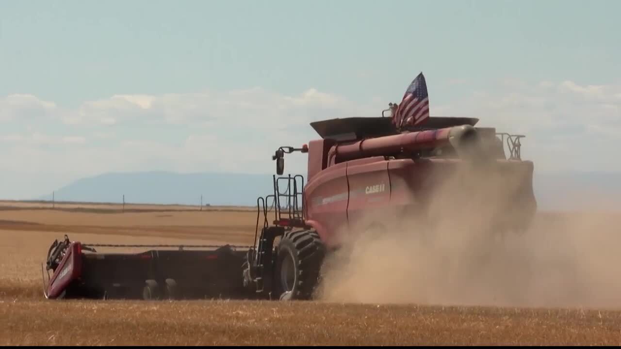 Wheat Tractor.jpg