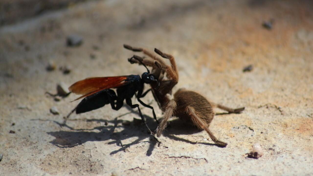 SCARY! 5 creepy bugs in Arizona