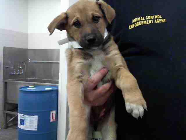 Adoptable pets from Maricopa County Animal Care and Control and Arizona Humane Society (5/31)