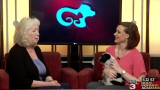 Pet Paws: The value of fostering shelter pets
