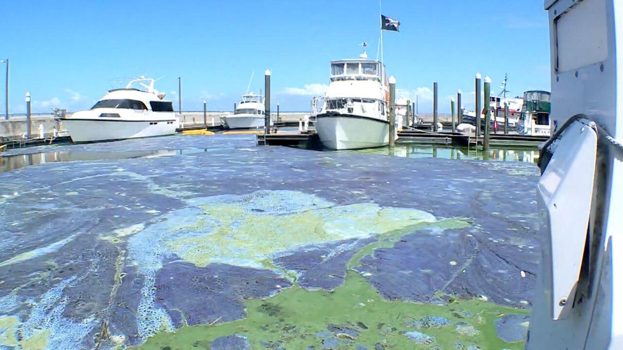 Algae at Pahokee Marina on April 30, 2021