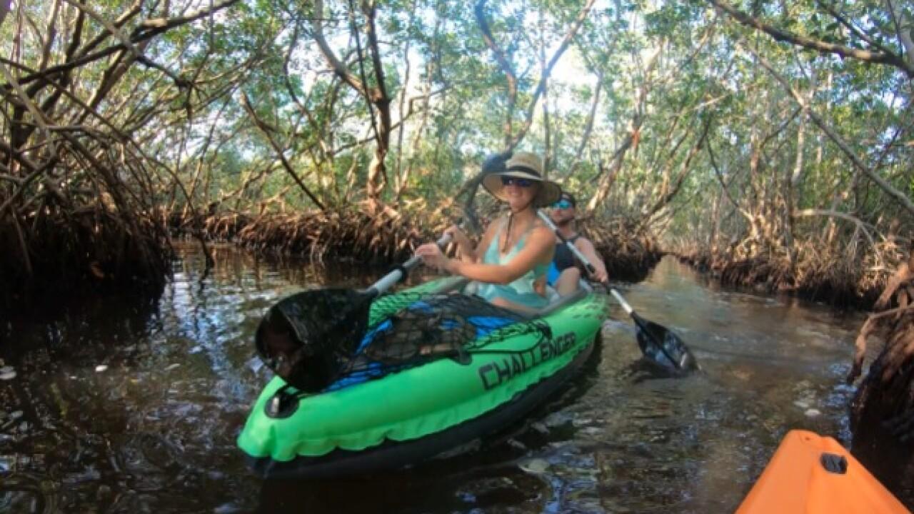 Kayak through mangrove tunnels at Weedon Island Preserve