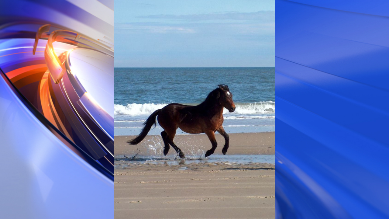 Corolla Wild Horse Fund announces death of famous wild horse