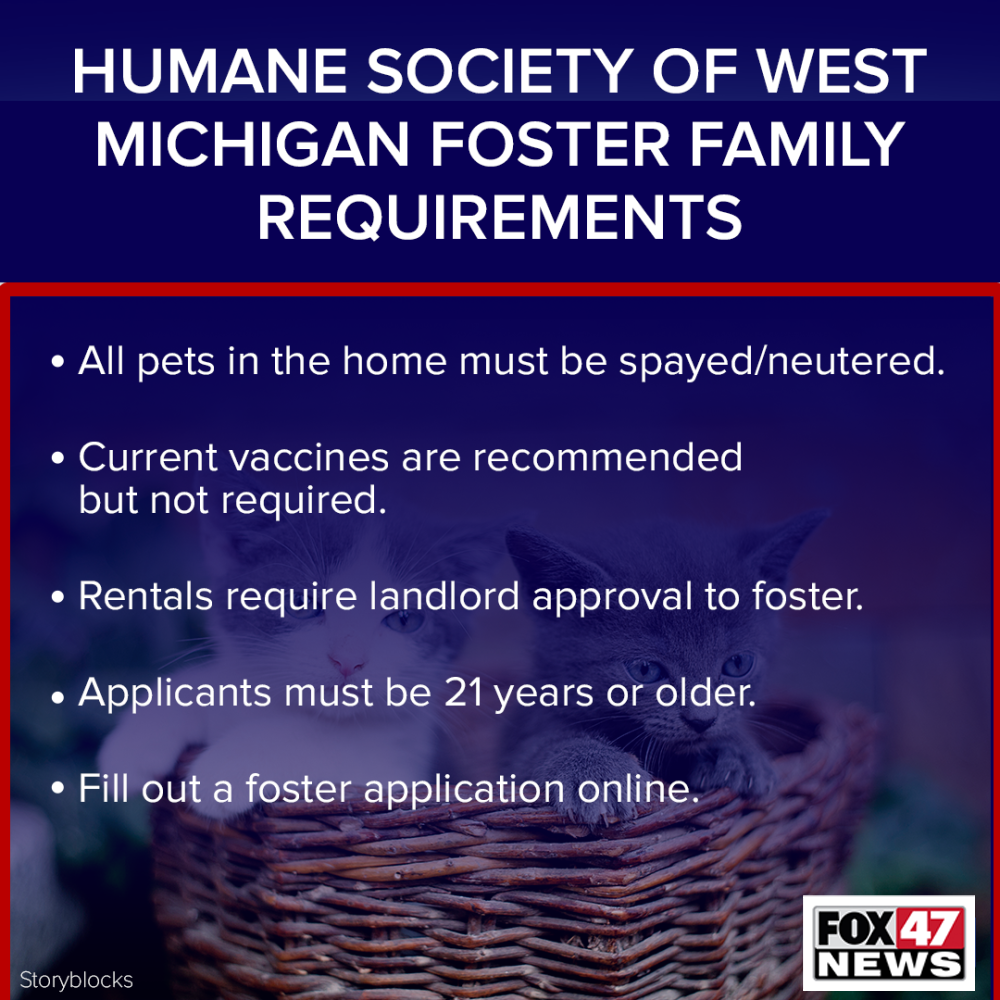 Humane Society Foster Family Requirements