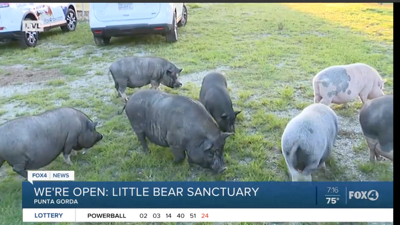 Little Bear Sanctuary