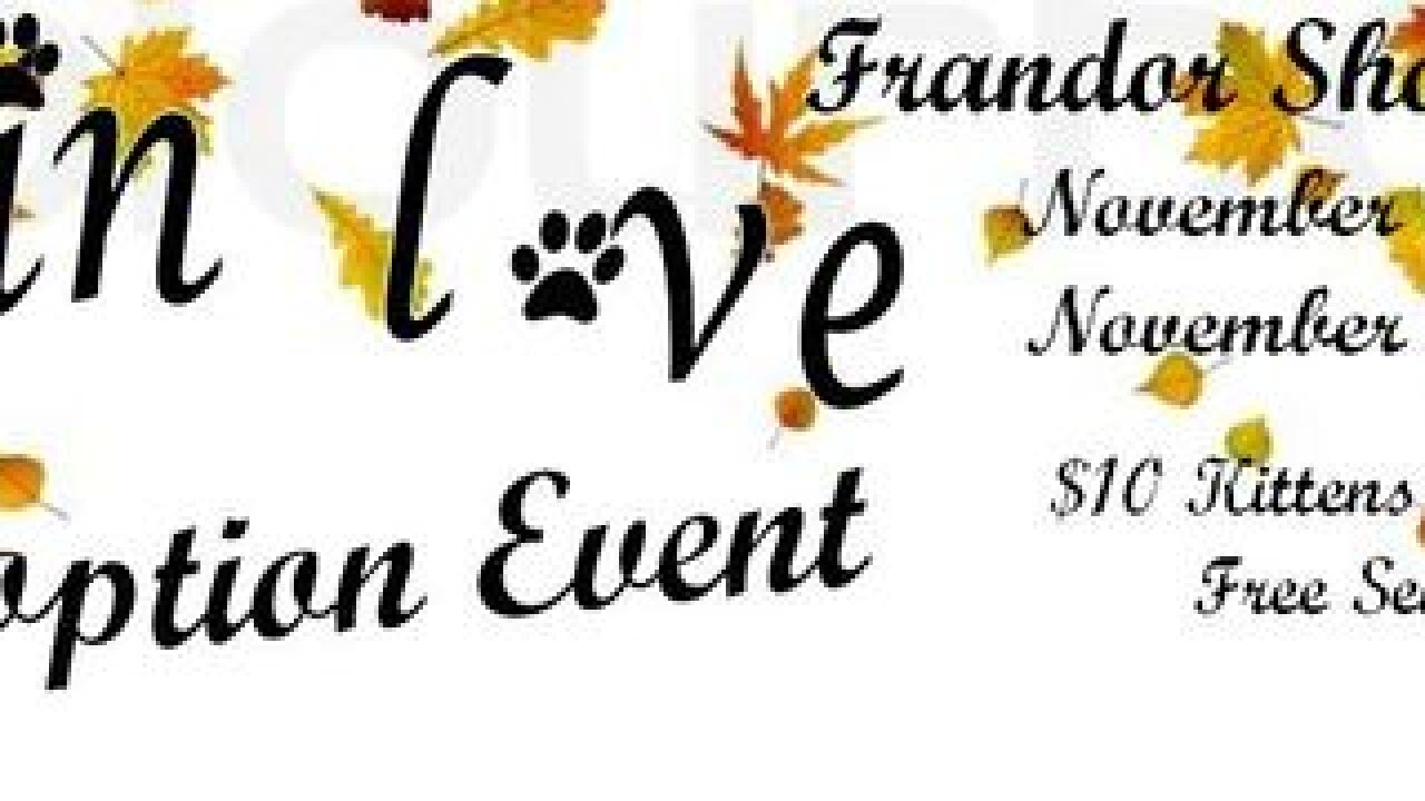 """Fall in Love"" Cat Adoption Event at Frandor"