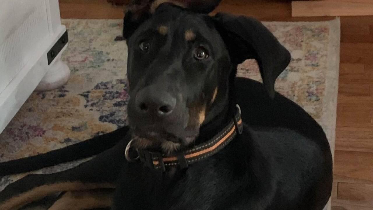 Police are investigating after a man's dogs were found dead after his truck and trailer were stolen.