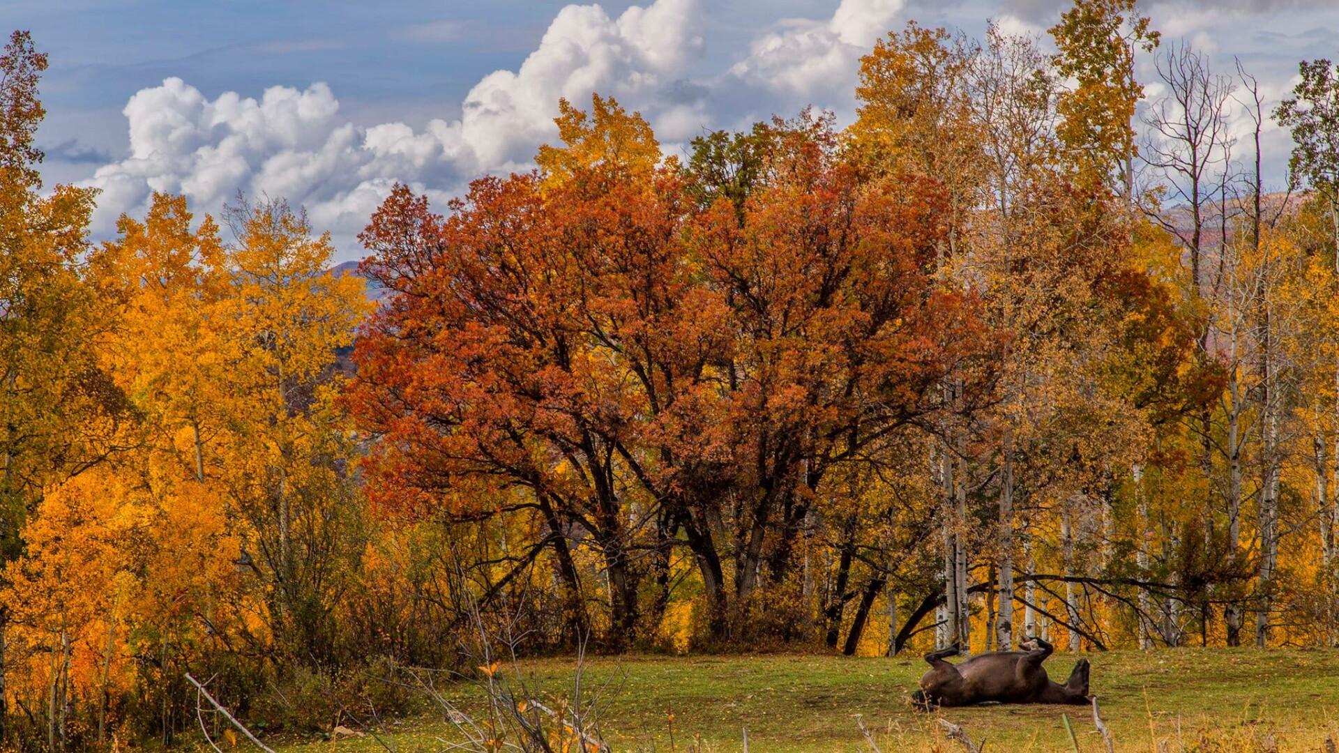 1Kebler Pass Elk Kimmie Randall.jpg