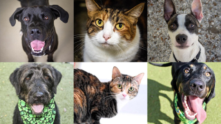 Adoptable-Pets-March-1.png