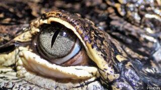 alligator eye.JPG
