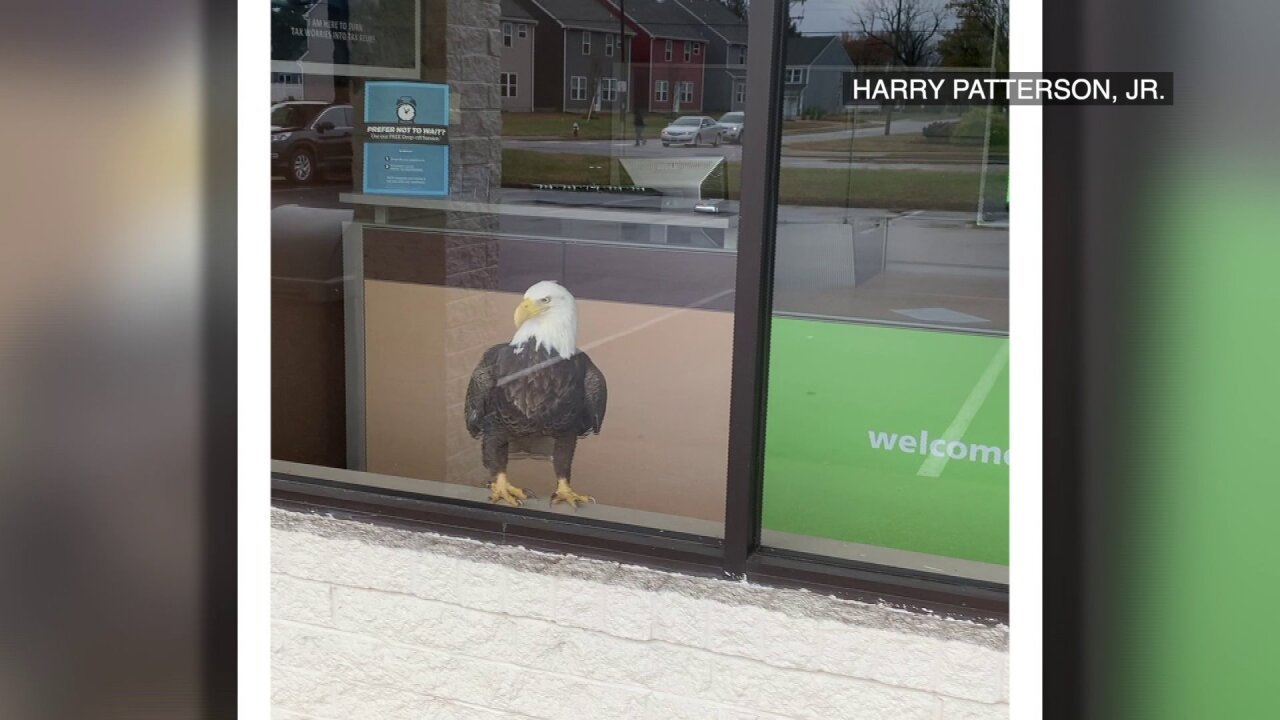 Unusual visitor forces its way into closed H&R Block office in Virginia Beach