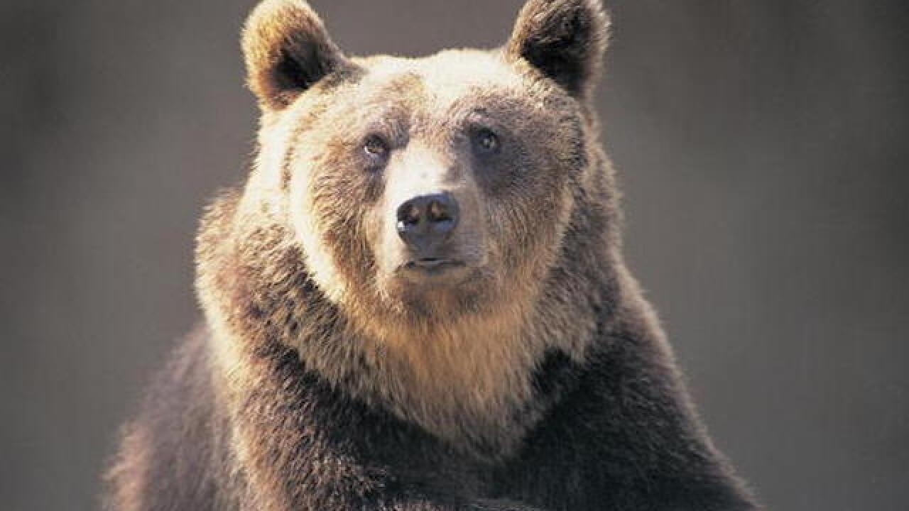 Woman has invasive bear killed, gets backlash