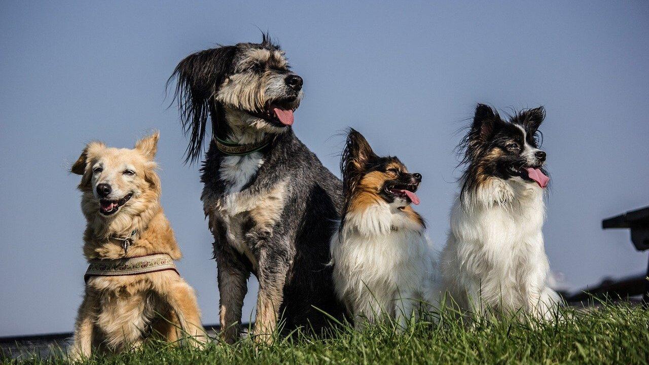 four-dogs-1919152_1280.jpg