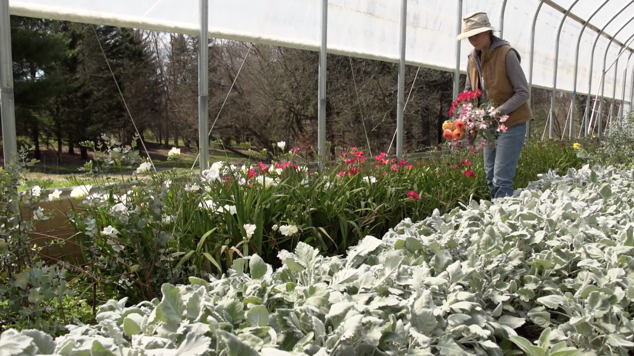 Small flower farm finds unexpected opportunities amid coronavirus economic downturn