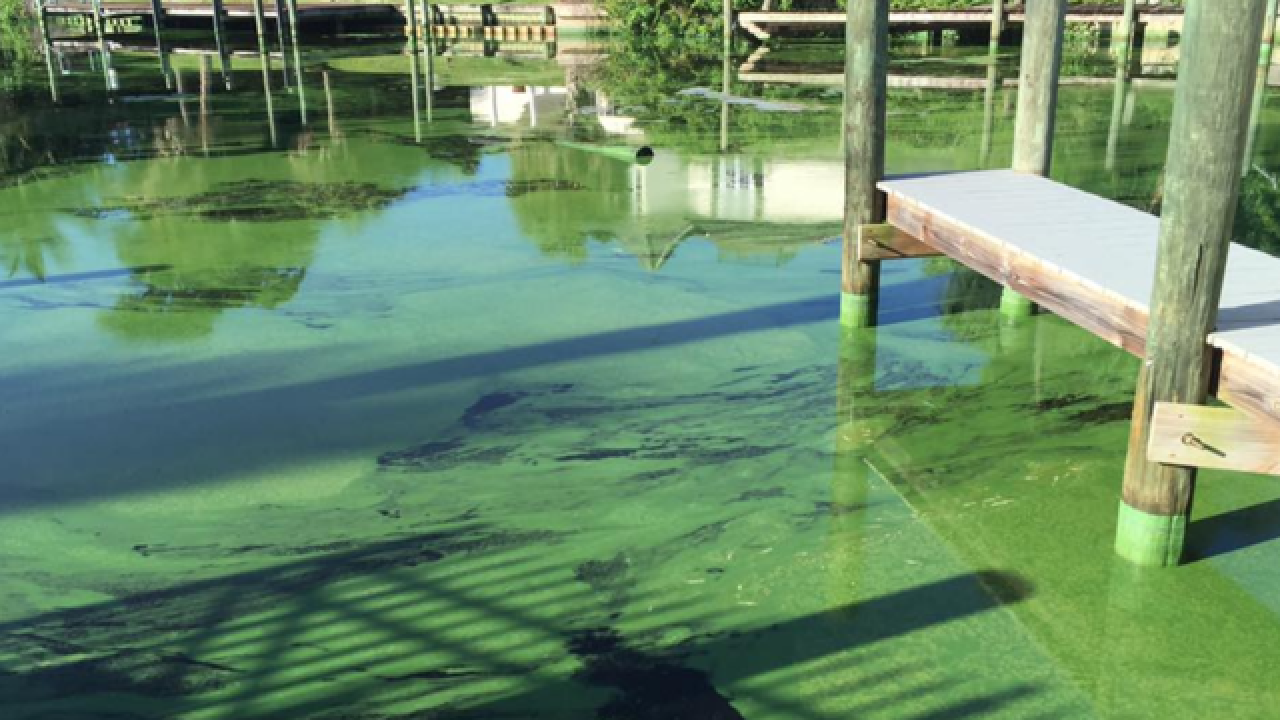 Algae bloom study shows septic tanks as a major issue