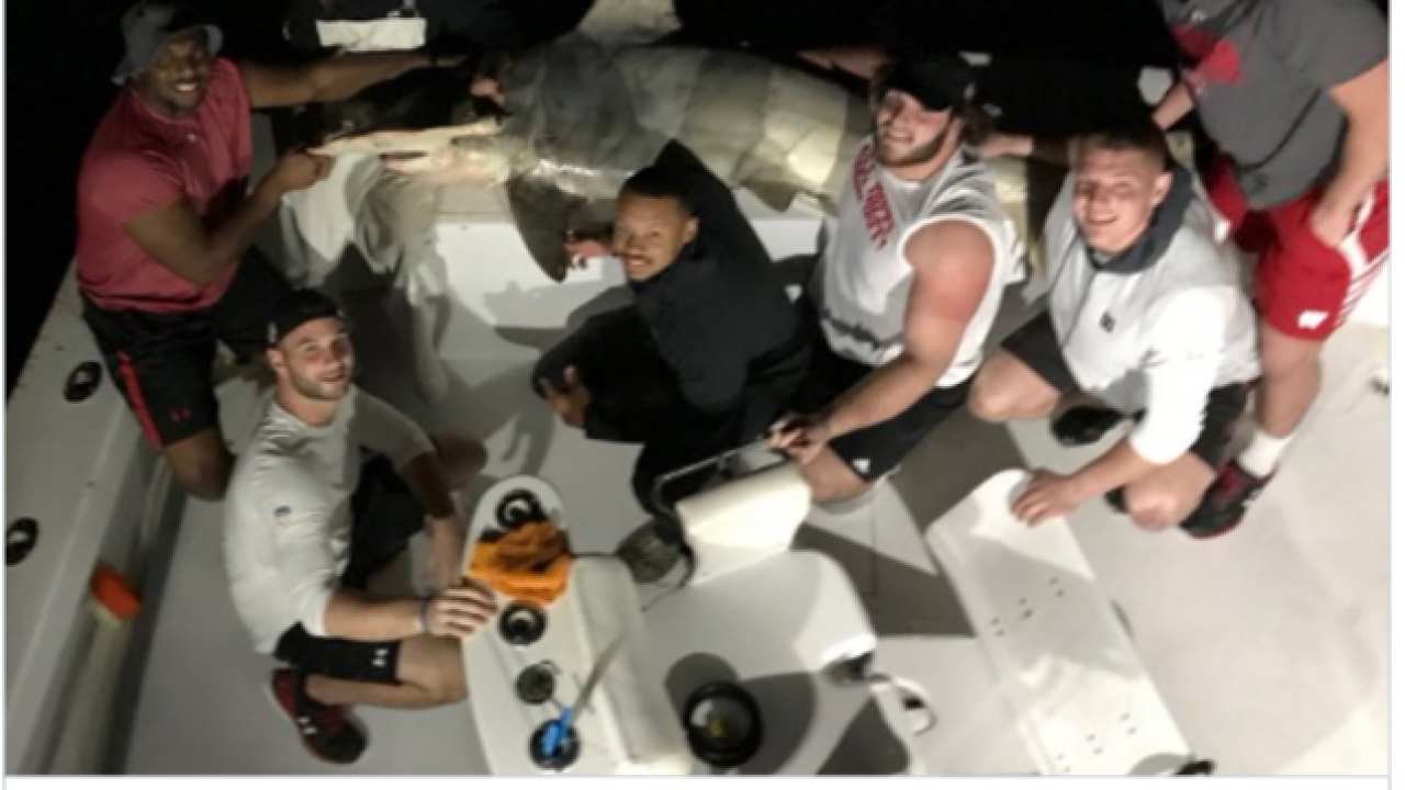 Wisconsin Badgers football players haul in 450-pound hammerhead shark in Miami