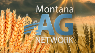 Montana Ag Network: June 13th Report – MSGA mid-year meeting, USDA institute's relocation