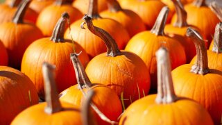 Pumpkins pumpkin patch generic - Pixabay.jpg