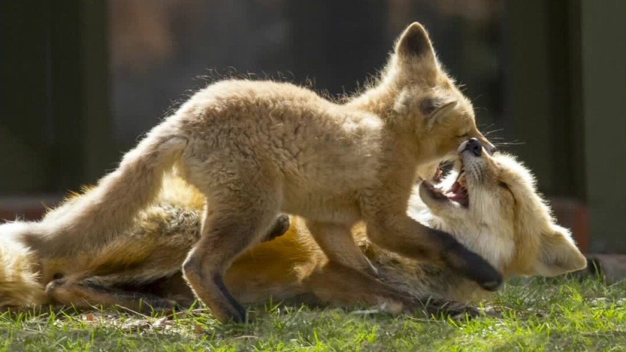 Dr Alan Lipkin_fox family photography