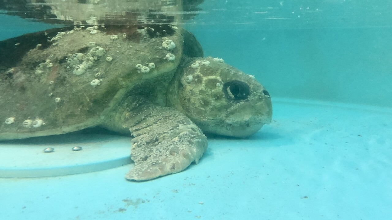 wptv-turtle-rehab4.jpg
