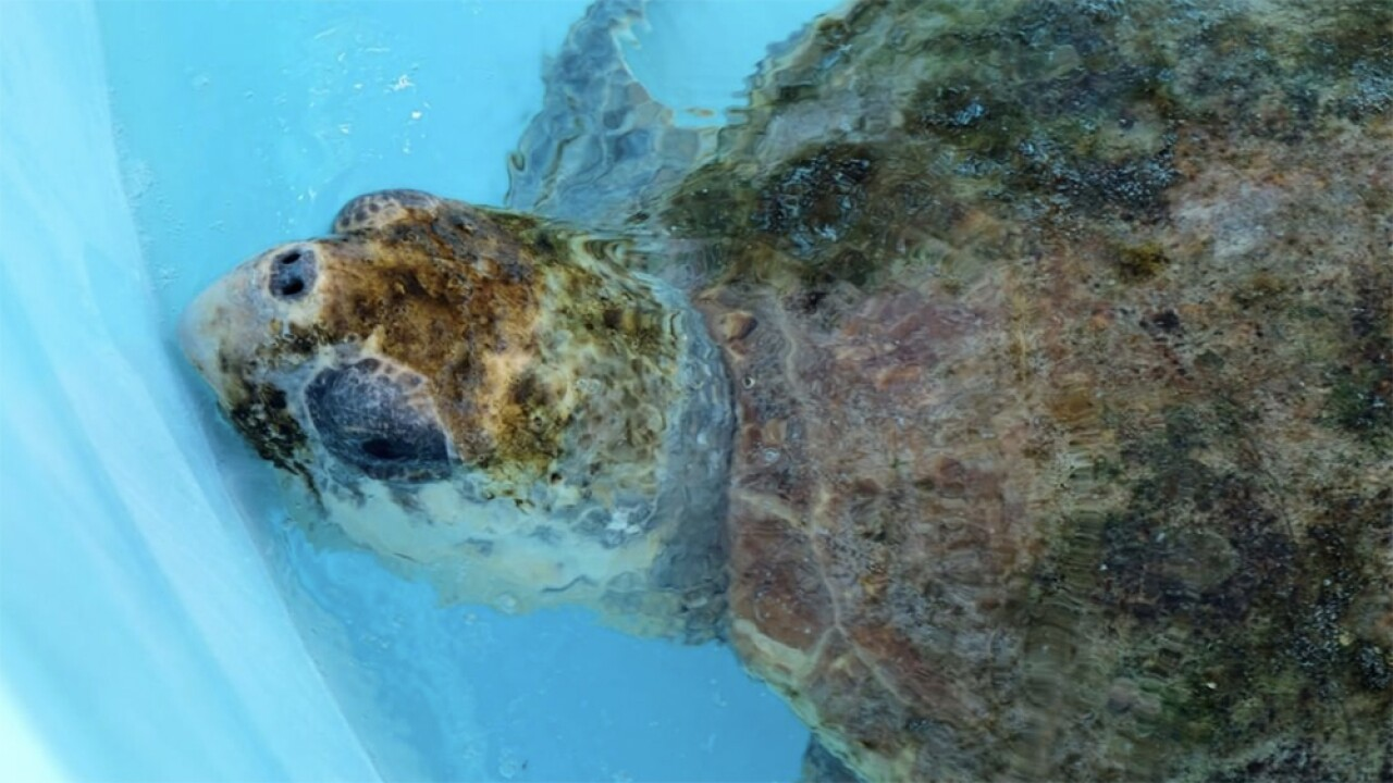 WPTV-LOGGERHEAD-MARINELIFE-CENTER.jpg