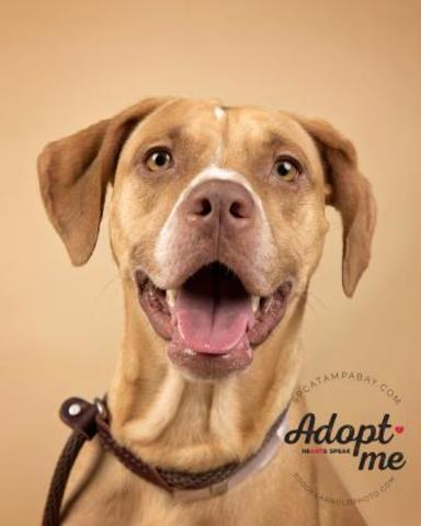 PHOTOS: 20+ adoptable pets in the Tampa Bay area for the weekend of October 5