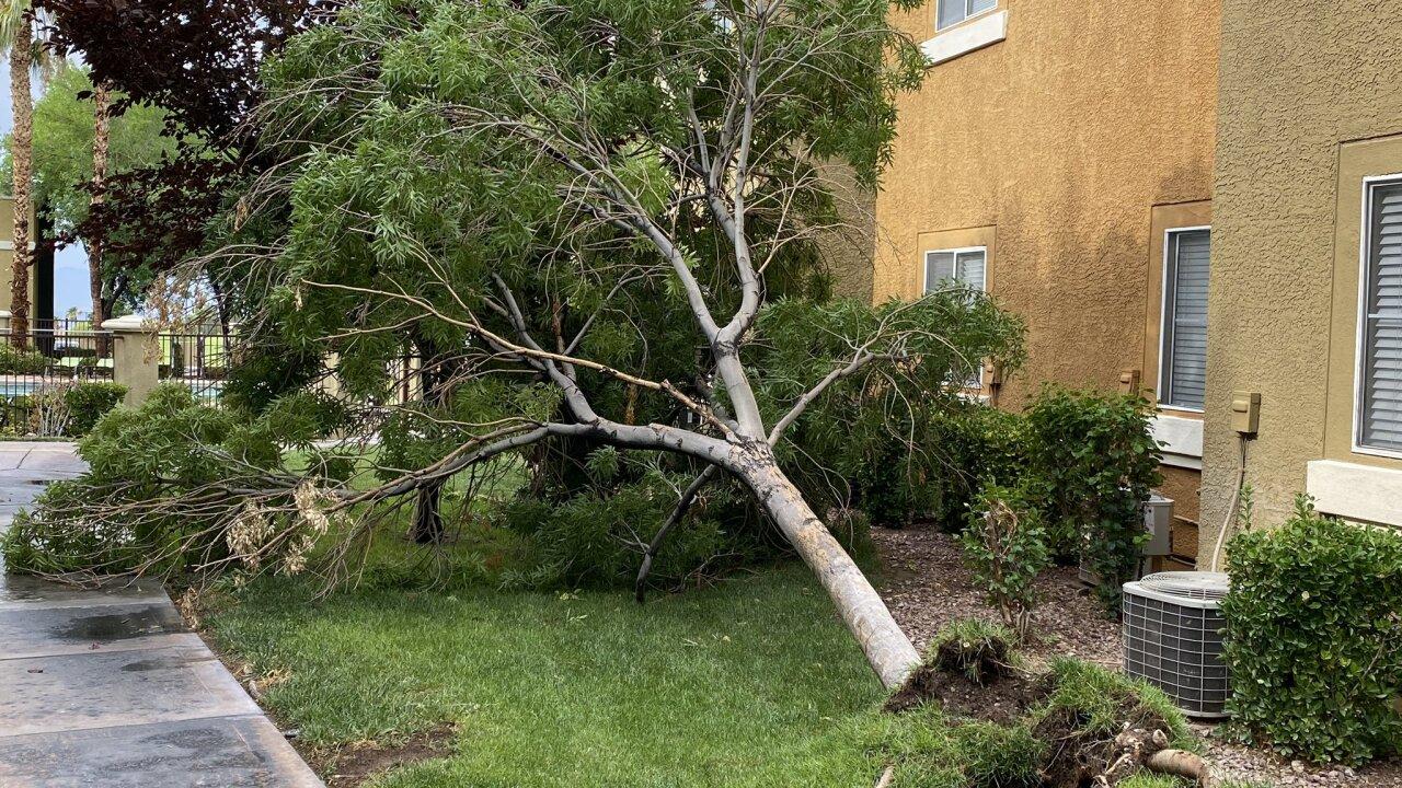 downed tree dani.jpeg