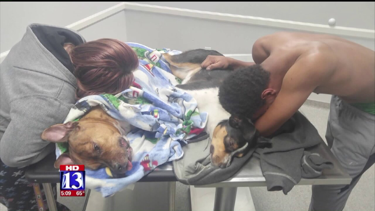 Ogden family urges others to be aware of poison symptoms after losing beloveddogs