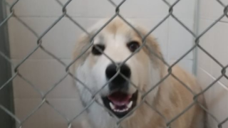 sheboygan-dog.PNG
