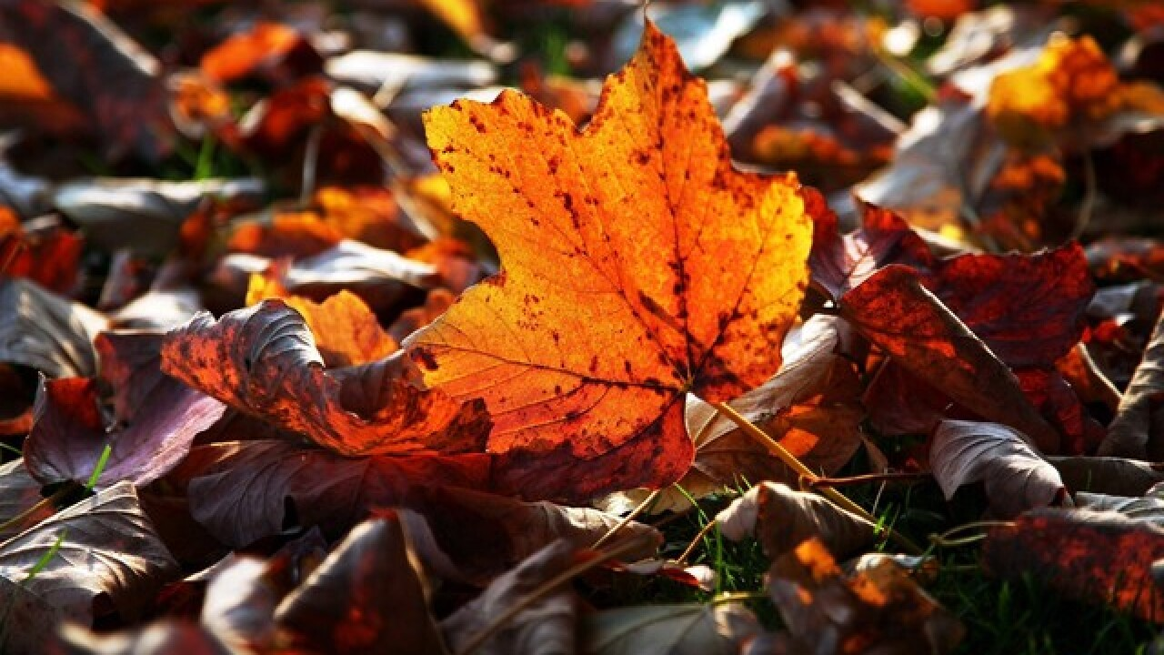 Where you can catch changing fall foliage in San Diego County
