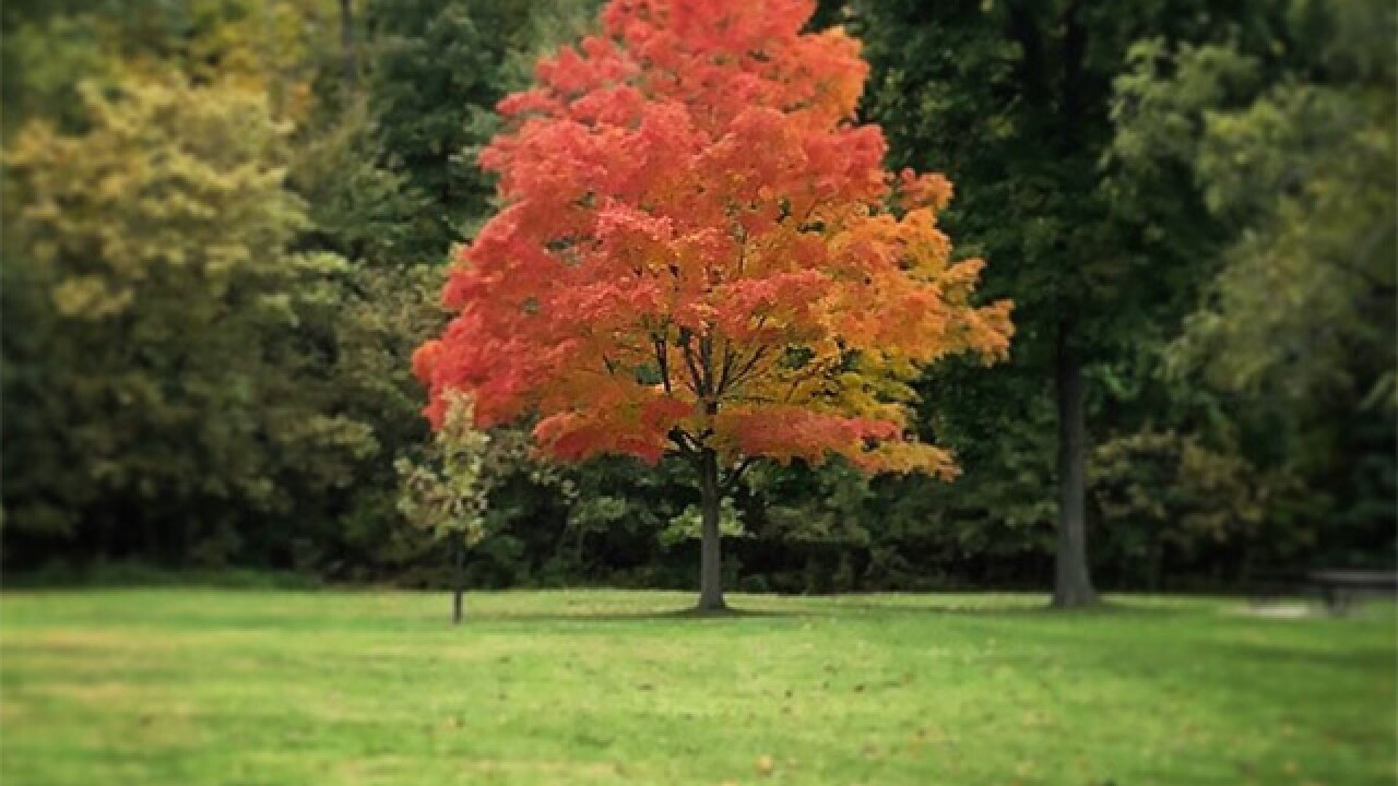 Why you are not seeing bursts of fall foliage across Northeast Ohio