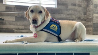 Mango, Deb Morrison's hearing dog provided to her by Canine Companions