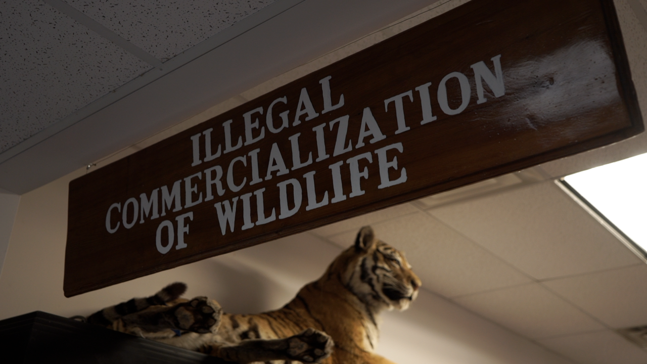 Warehouse home to over a million illegal wildlife items confiscated by law enforcement