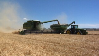Montana Ag Network: Molson Coors barley harvest underway in Montana and Wyoming