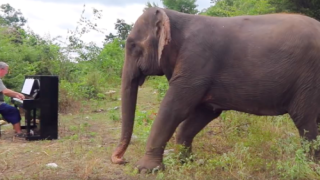 This Man Plays Classical Music For Elephants—and The Videos Will Melt Your Heart