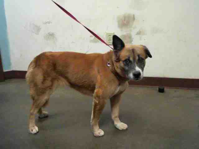 Adoptable pets from Maricopa County Animal Care and Control and Arizona Humane Society (8/2)