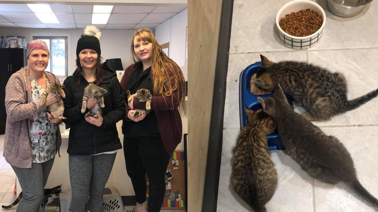 Photos: Oil worker uses his coffee to rescue kittens found frozen to theground
