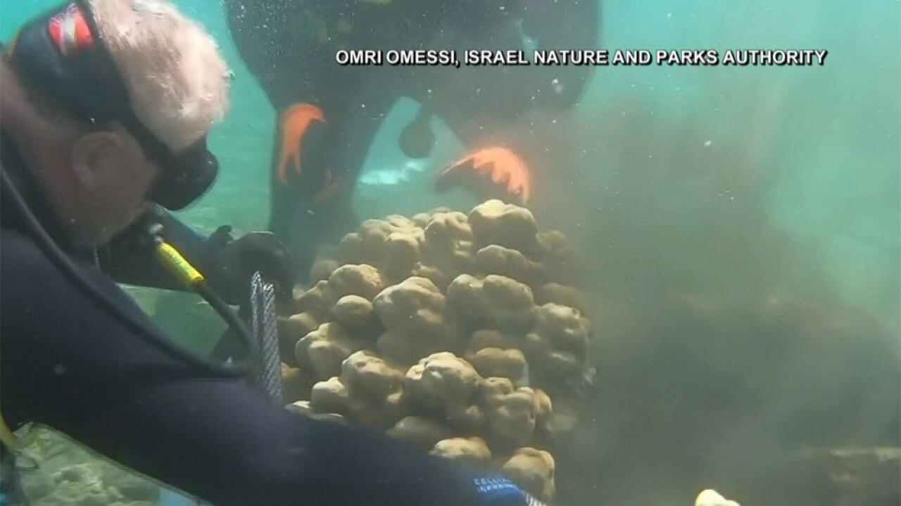 WPTV-coral-removal-in-Israel-2.jpg