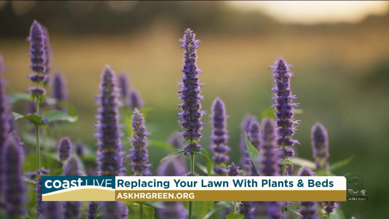 Some native plants that can make your garden more eco-friendly on CoastLive