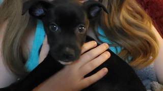 Czarnecki-parvo-puppy.png