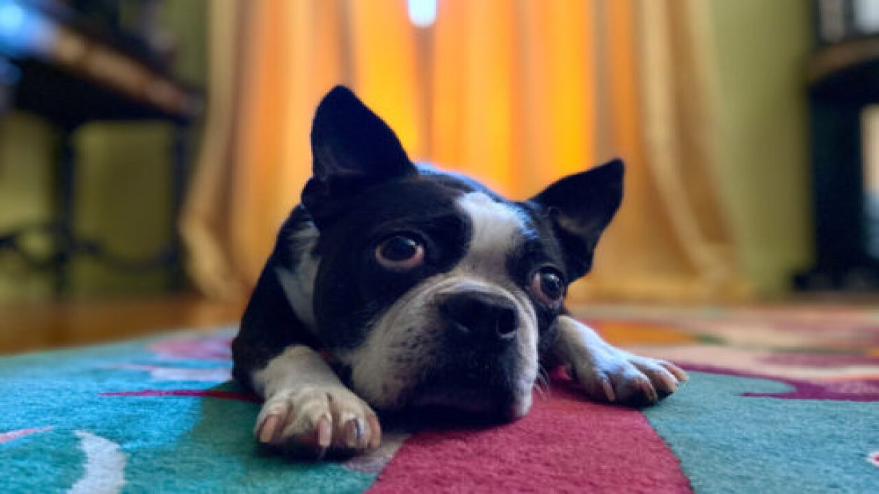 You Can Take Great Photos Of Your Pets With The New IPhone