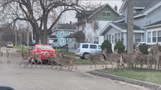 herd of deer in Wyoming, MI via video by Aaron Geller Photography.png