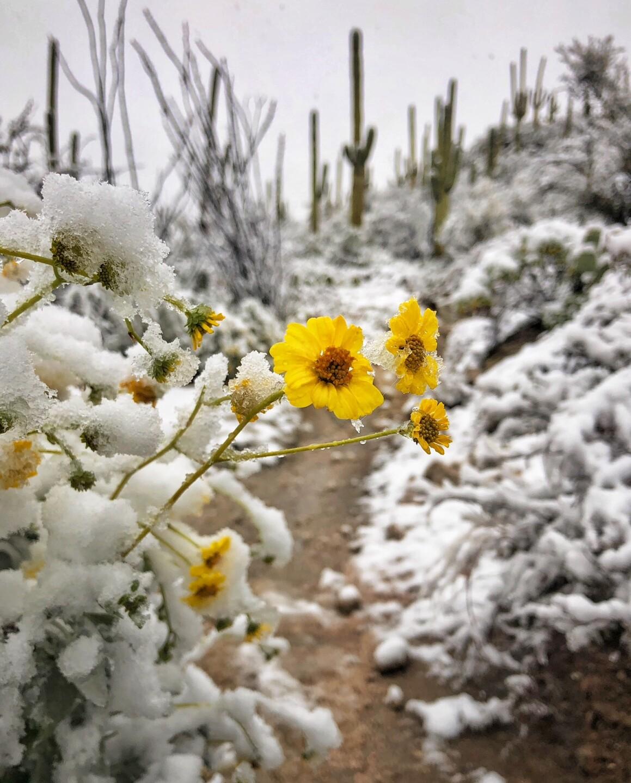 joseph-cyr-this-morning-around-Sabino-Canyon-3.jpg
