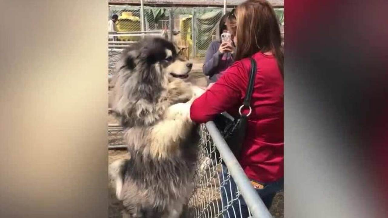 A dog rescue group from Palm Beach County traveled to China this week to rescue more than 30 dogs from the dog-meat trade.