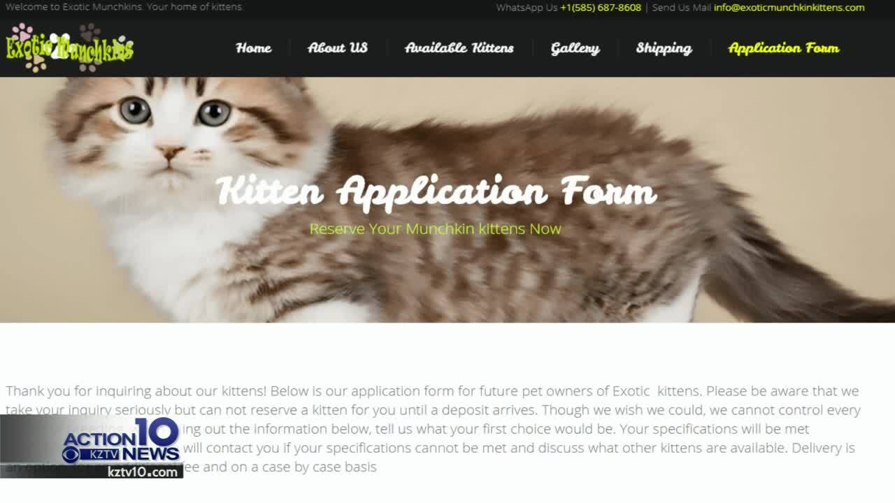 Pet scams target online shoppers