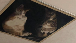 Shop Owner Installed A Glass Ceiling For His Cats And The Photos Are Hilarious