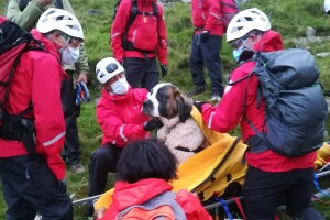 Britain Dog Mountain Rescue