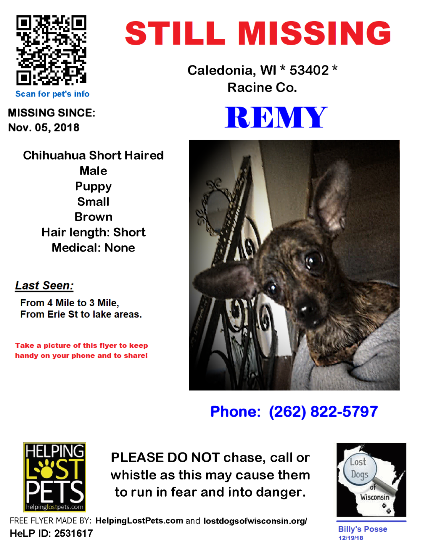 110518 Remy Chihuahua Puppy - BillyPosseUpdate112618.png