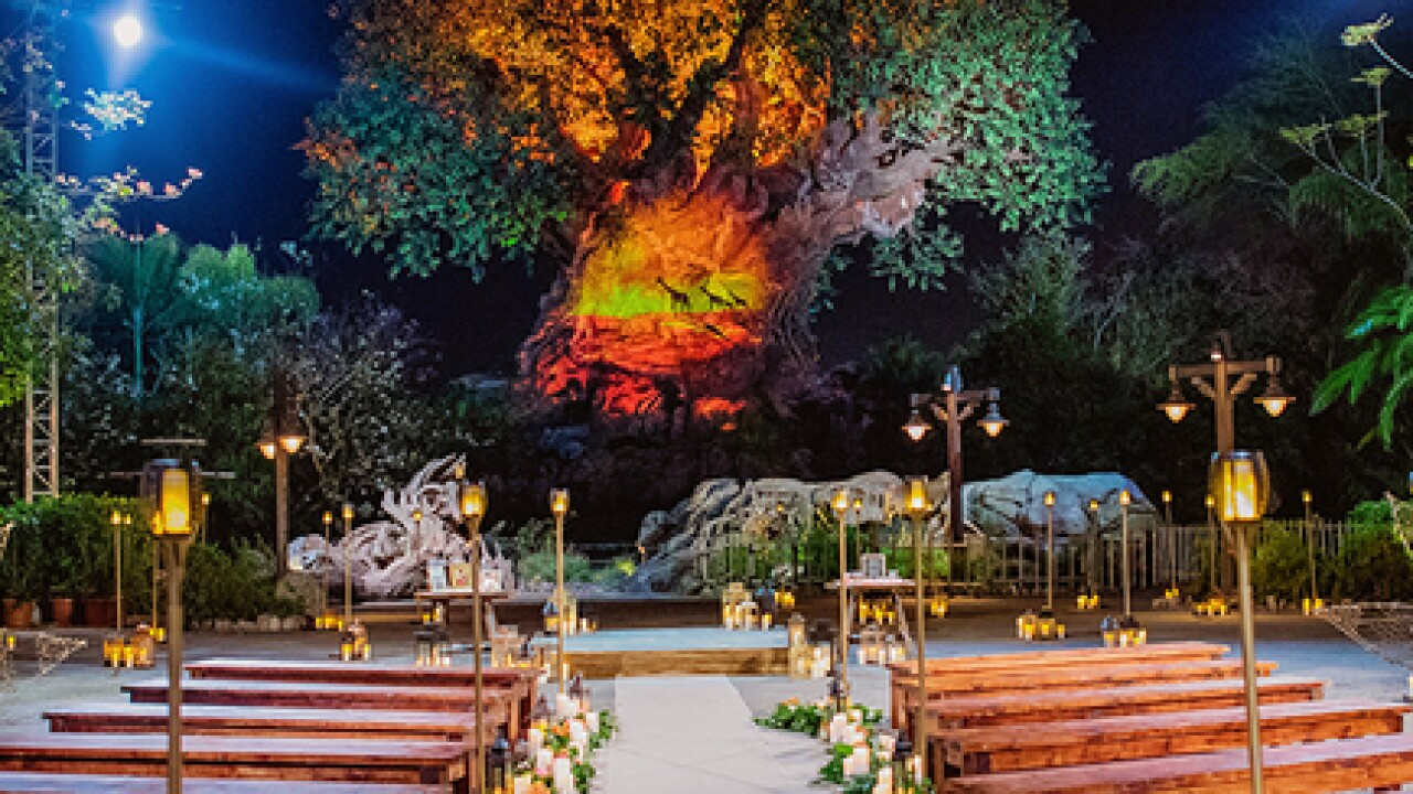 Get married in front of Tree of Life at Disney