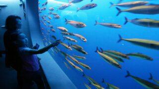 Livestream Aquariums And Zoos During Self-quarantine For A Moment Of Calm